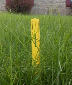 ruler in grass measuring the length