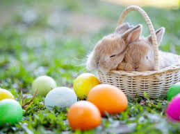 two bunnies in a basket with easter eggs