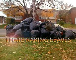 leaves in bags in a huge pile